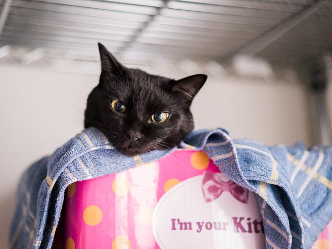 α7SのISO20000で撮った猫のサンプル写真