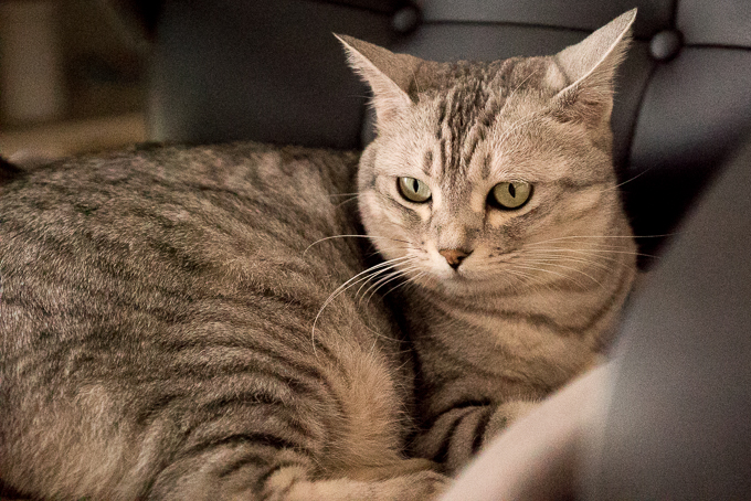 α7SのISO80000で写した猫のサンプル写真