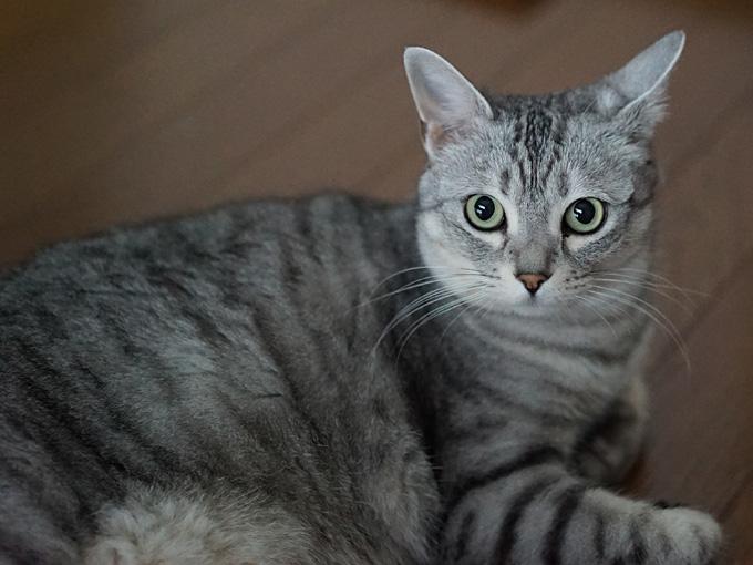 α7S(ILCE-7S)ISO12800の猫写真