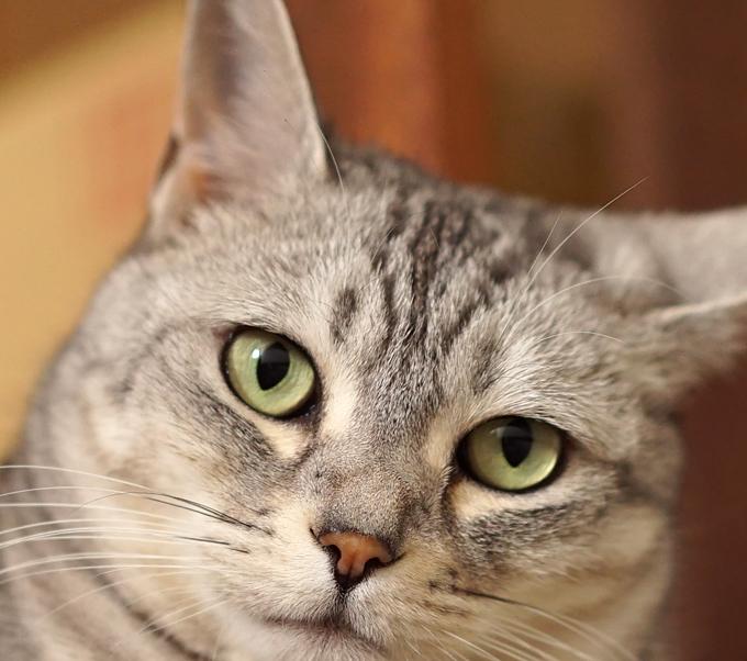 α7sで写した猫の顔のドアップ