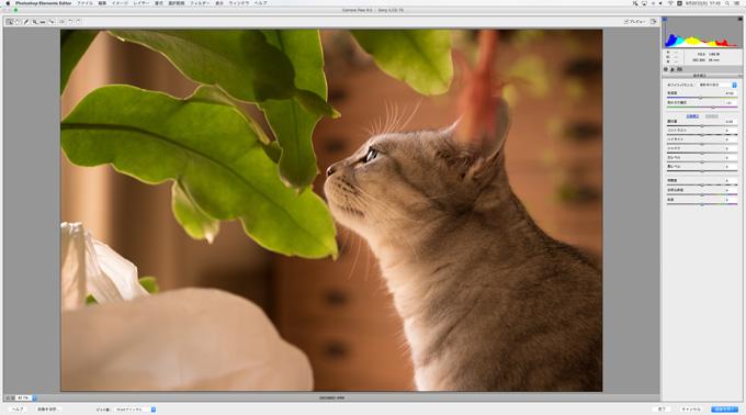 RawデータってPhotoshop Elements13でも普通に編集できる