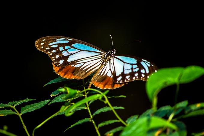 蝶とか撮って何が楽しいの?