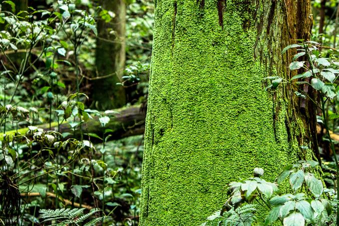風神山の神々しい木々
