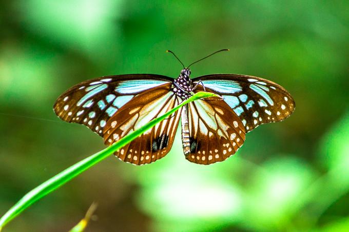 蝶めちゃ綺麗だった