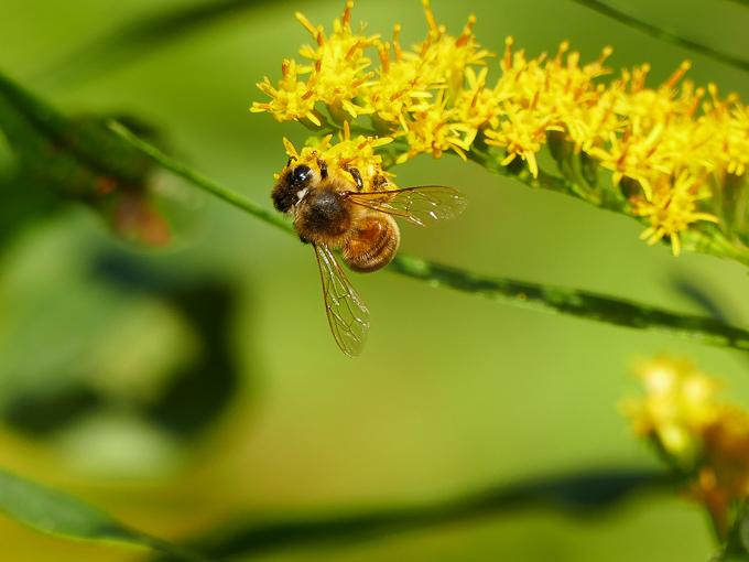 FZ1000で写した昆虫