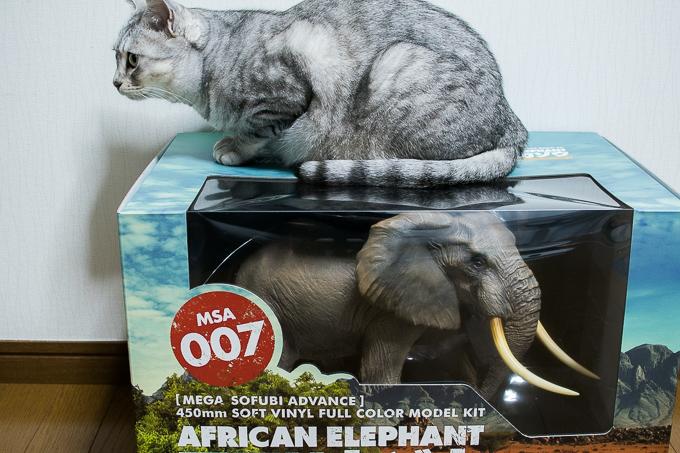 超ビッグ!海洋堂のアフリカゾウフィギュアは猫並みの大きさ