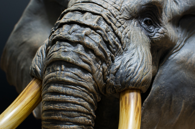 海洋堂のアフリカゾウフィギュアの象牙のディティール