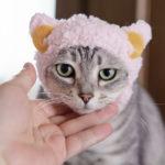 奇譚クラブの猫用帽子「かわいい かわいい ねこひつじちゃん」が本当に可愛いかった!