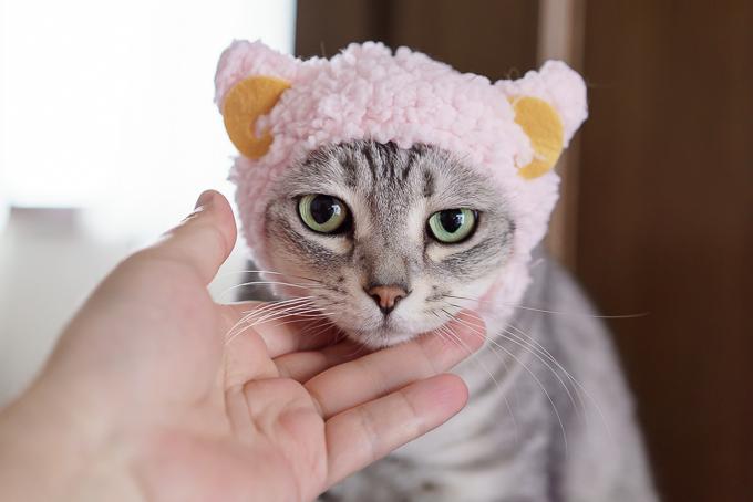 奇譚クラブの猫用帽子「かわいい かわいい ねこひつじちゃん」が本当に可愛い!