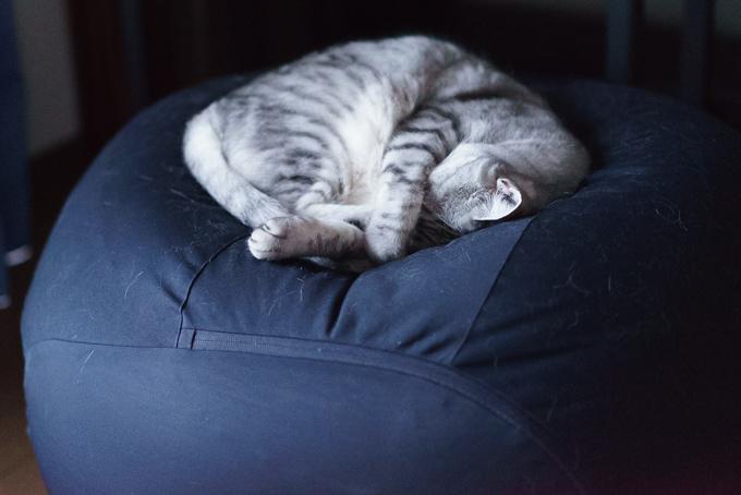 夜になっても体にフィットするソファ・オーバル・セットから降りないうちの猫
