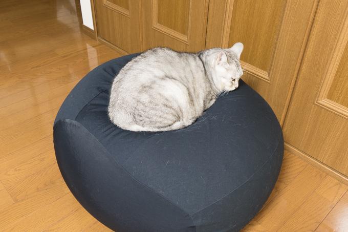 無印良品「体にフィットするソファ・オーバル・セット」は猫にフィットするらしい