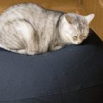 無印良品「体にフィットするソファ・オーバル・セット」は本当に猫をダメにする