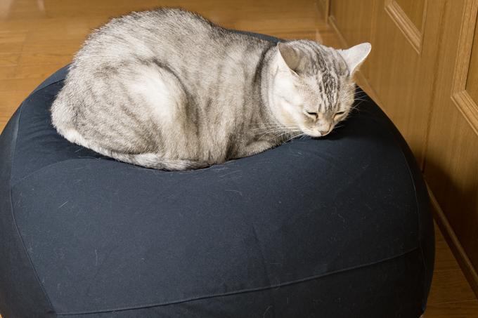 無印良品の「体にフィットするソファ・オーバル・セット」でダメになったうちの猫をご覧下さい