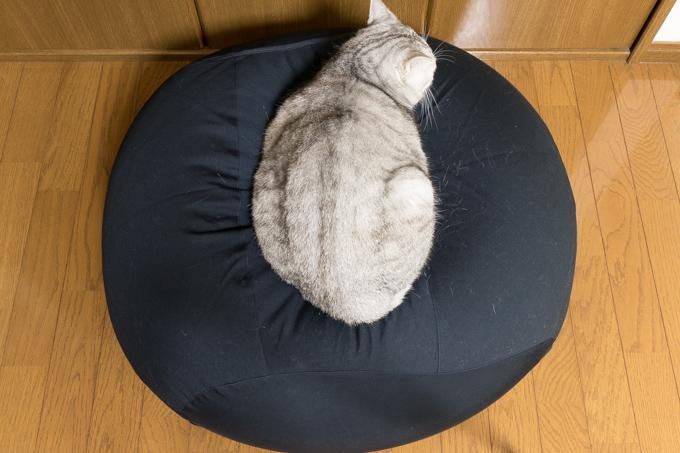 体にフィットするソファ・オーバル・セットに猫乗りすぎ
