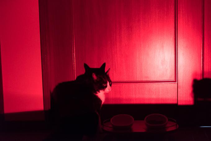 ビクセン(Vixen)天体観測用ライト「SG-L01」の赤色LEDの明るさその2
